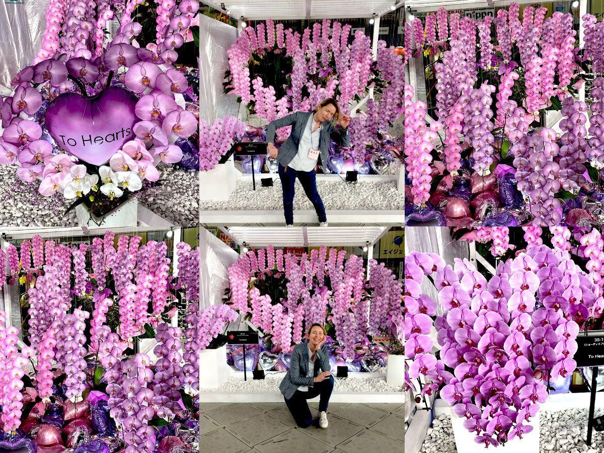 Happy Valentine In 2020 Orchideenarten Orchideen Garten Orchideen