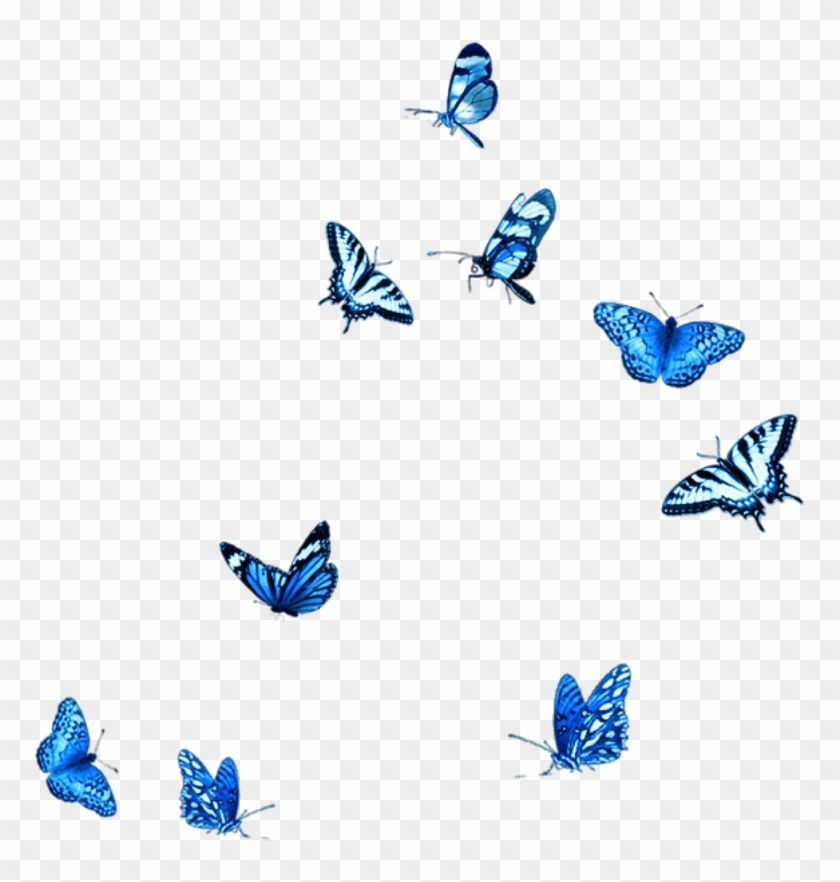 Blue Butterfly Png Butterfly Blue Free Photo On Pixabay 886 720 Png Download Free Transparent Blue Butterfly Butterfly Background Butterfly Illustration