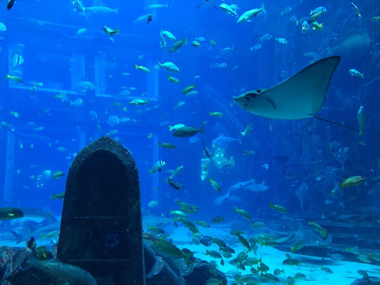 Freshwater aquarium fish in dubai - Aquarium Fish Tank Dubai