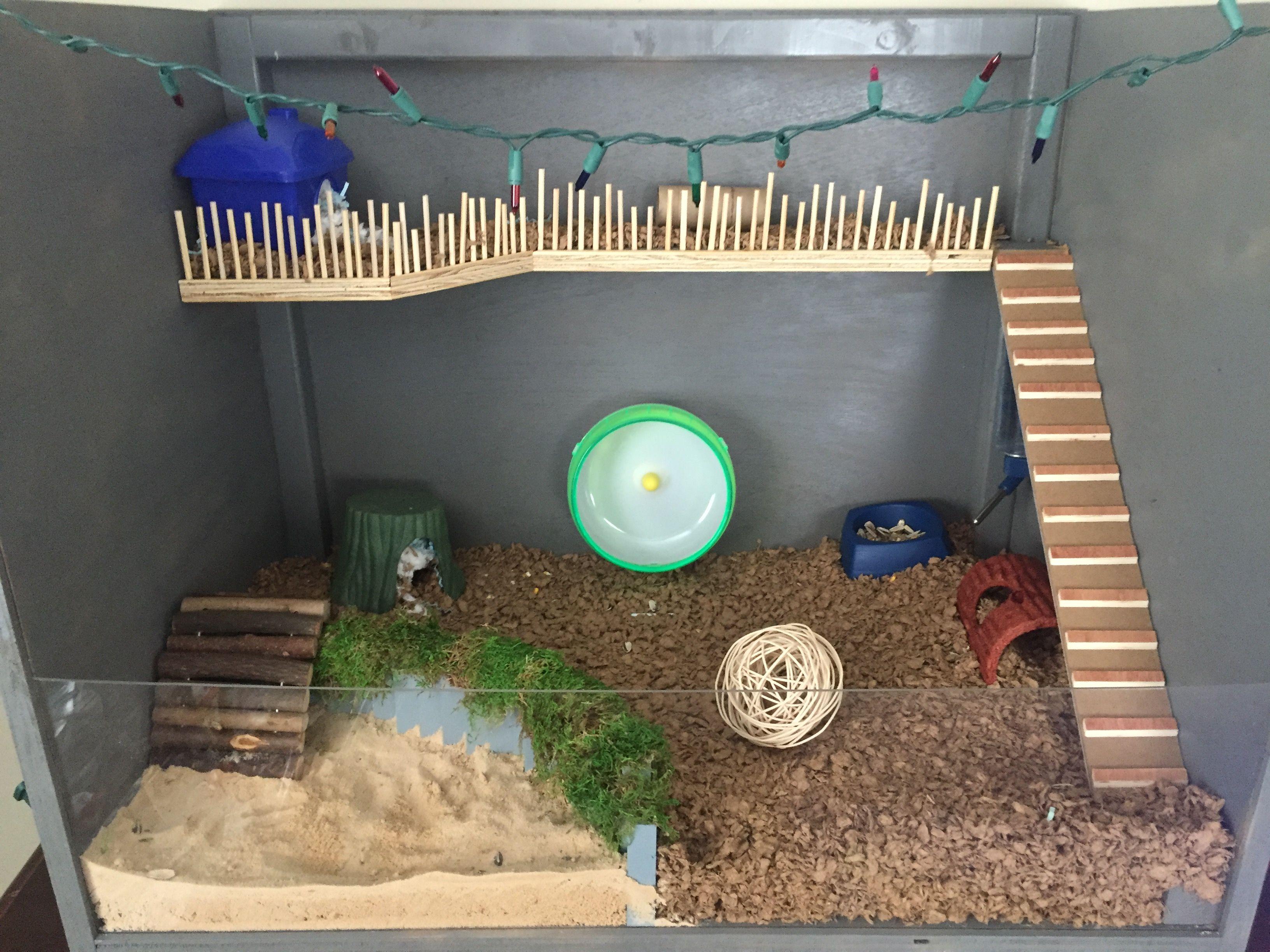 Diy Dwarf Hamster Cage All Custom Made Christmas Lights Just For Show Hamster Toys Hamster Diy Diy Hamster Toys