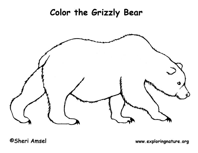 Free Grizzly Bear Coloring Pages Bear Grizzly Coloring Page Exploring Nature Educatio Bear Coloring Pages Polar Bear Coloring Page Bear Crafts Preschool