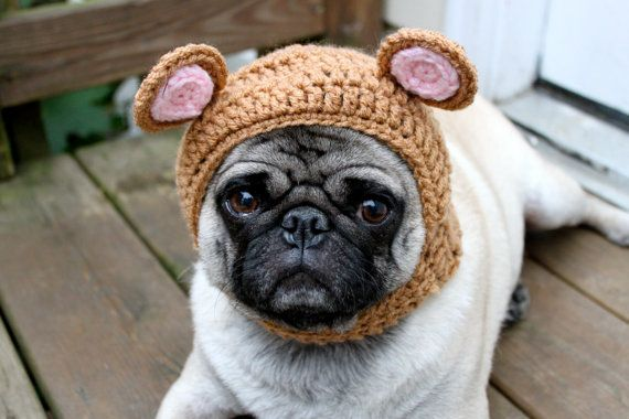 Dog Hat My Baby Bear Hat Made To Order Cute Pugs Pugs Baby Dogs