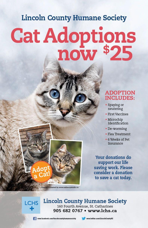 Cat adoptions 25 humane society cat adoption adoption