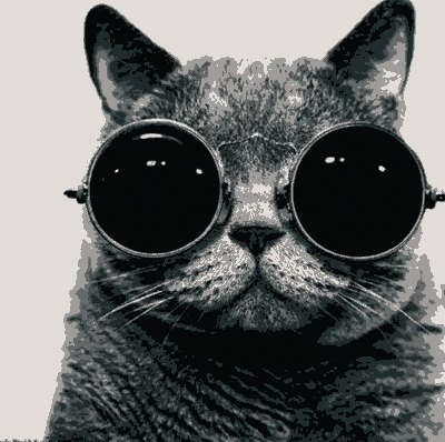 I dig the glasses, oh and I dig the cat too