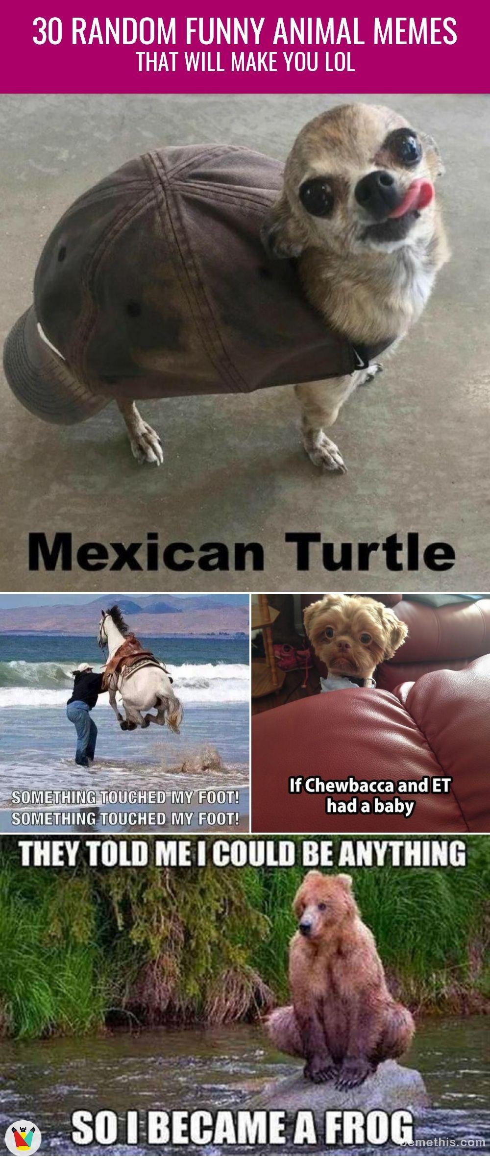 30 Random Funny Animal Memes That Will Make You Lol Funny Funnymemes Animals Animalmemes Lol Humor H Funny Animal Memes Animal Memes Cute Funny Animals
