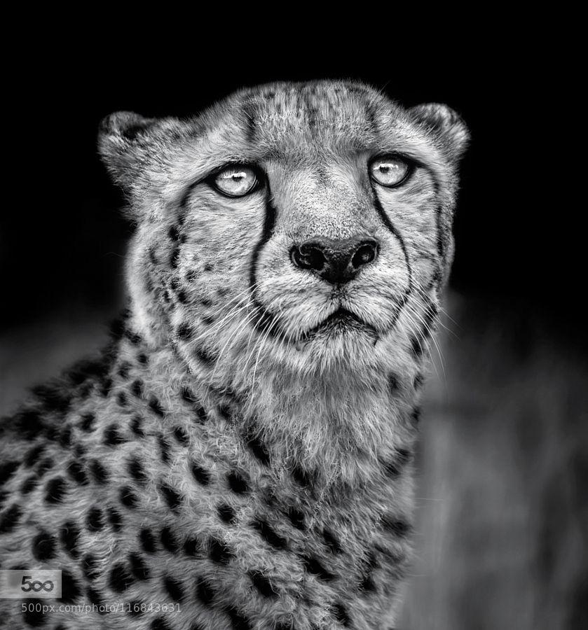 Penetrating Eyes.... by paulkeates #nature