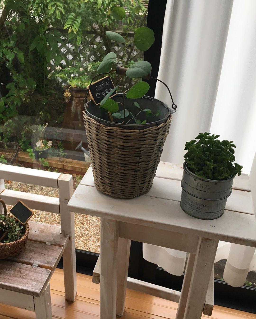 Épinglé par jardin et plantes sur DIY en 2020 Jardins