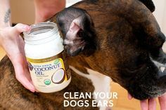 clean your dogs ears with coconut oil