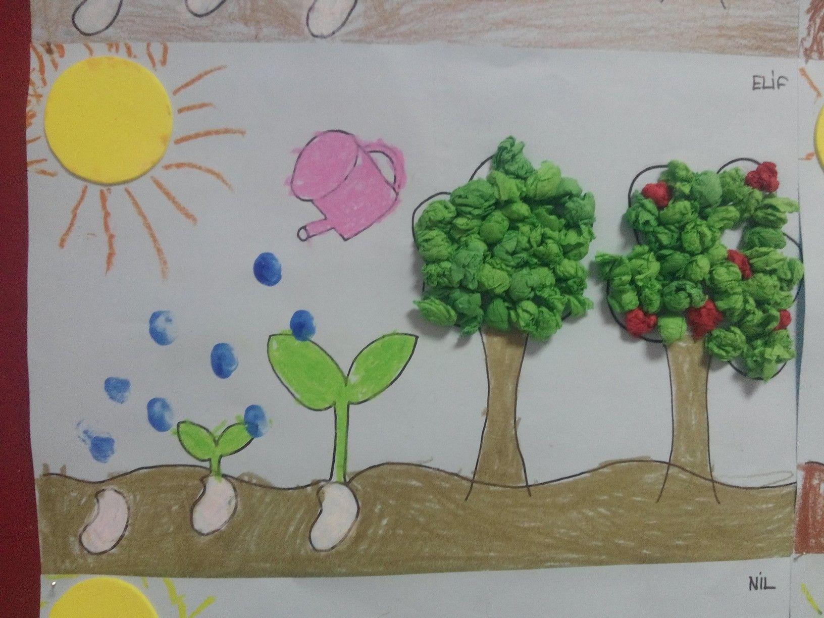 Ağac Oluşum Evreleri Sanat Etkinlikleri Character Art Ve