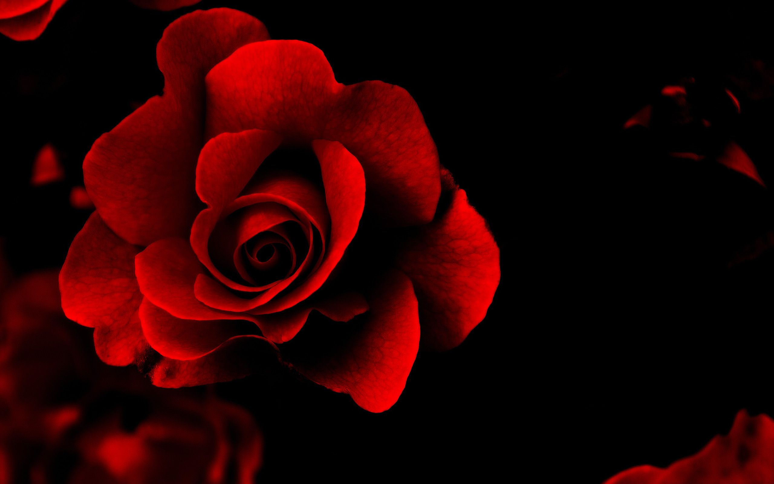 image of valentines day love Google Search Red flower