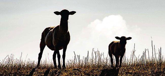 Llega la sexta edición de la Feria del Pastoreo de Villaralto ... 66ae58243f1df