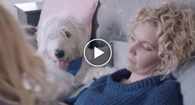 Emocionante Vídeo Conta Histórias Reais De Pessoas Que Foram Salvas Pelos Animais Que Adotaram