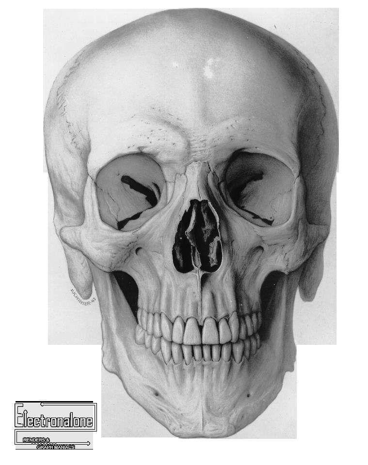 crane_humain_ossement_squelette_vue_de_face.png (Image PNG, 759 ...