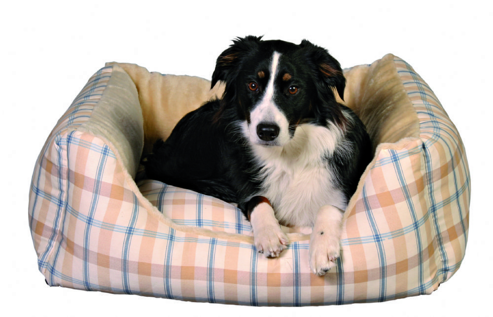 This dog bed, fitted with cotton / plush cover and