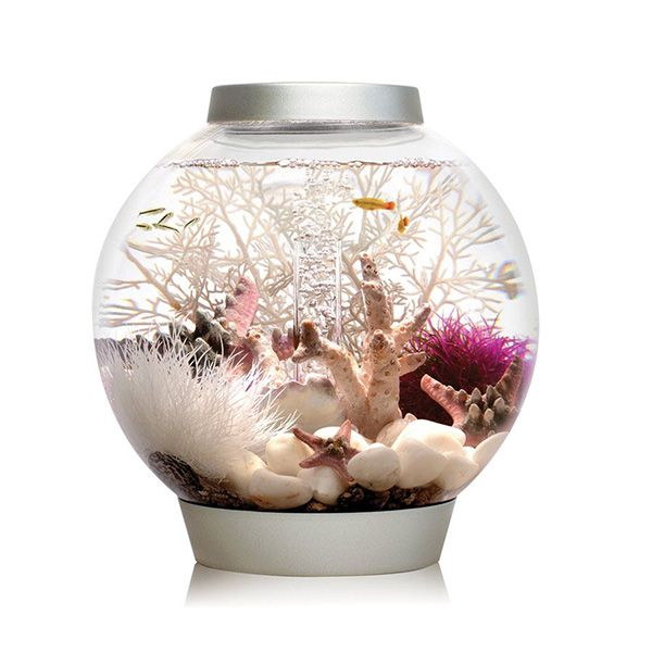 Baby biOrb is a simple and affordable introduction to fish keeping. It is ideal for keeping a few minnow sized fish and comes with everything you need to set up your aquarium.