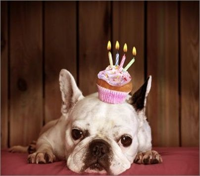Happy Birthday French Bulldog Animal Birthday