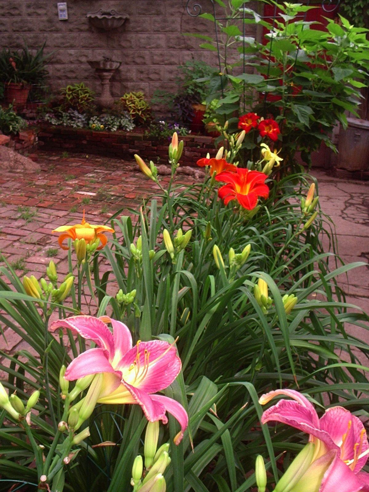Lily Garden My Back Yard Pinterest Lily Garden Garden And Iris Garden