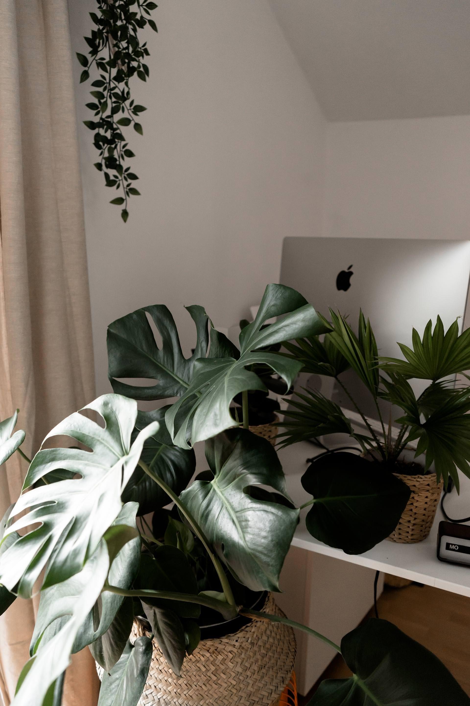 mit gr nen zimmerpflanzen eine tolle oase schaffen der gro e gr npflanzen guide. Black Bedroom Furniture Sets. Home Design Ideas