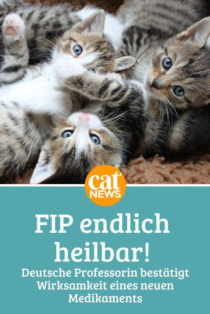 FIP endlich heilbar? Deutsche Professorin bestätigt