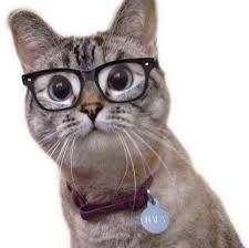 Resultado de imagen para gatos con gafas