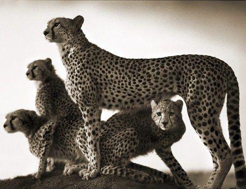 IKRÀN: Beautiful East Africa