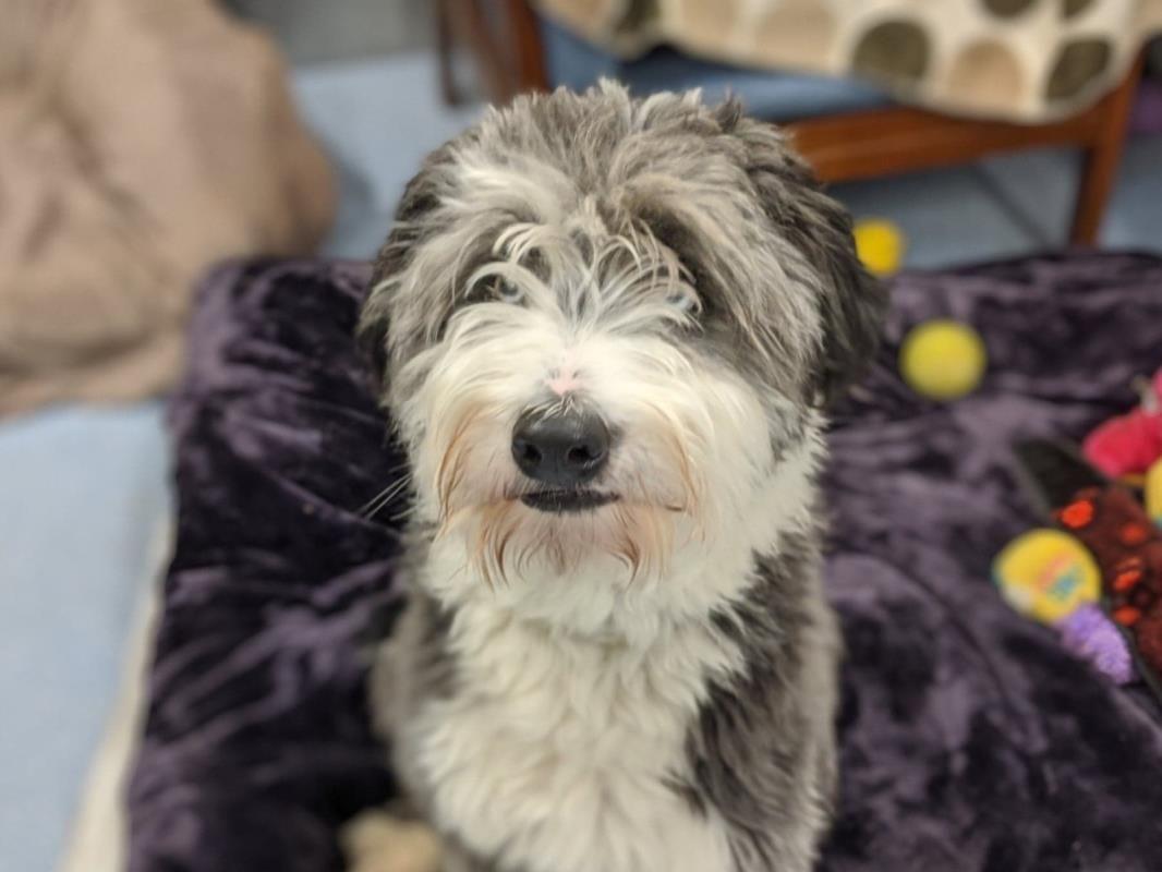 Max Dogs Trust Dogs Dog Bearding