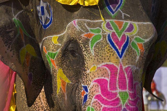 Boho festival elephant