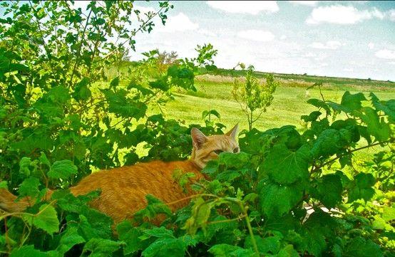 Kitty peeking over the vines.