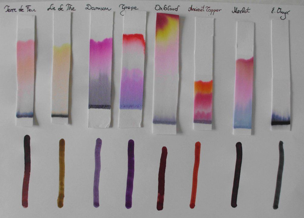 paper chromatography google search modeling data