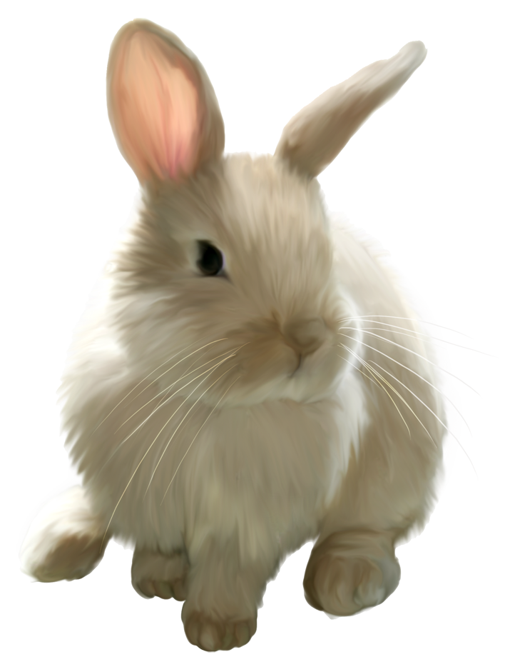 cute painted bunny png picture clipart   zajac