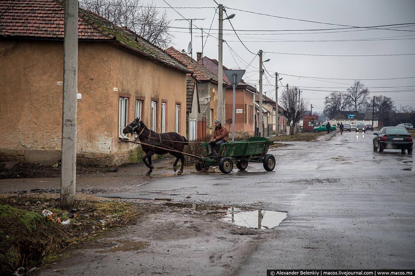 Hungarian Tzygane (Romale) :: Beregovo, Karpaty, West Ukraine :: photos by MACOS