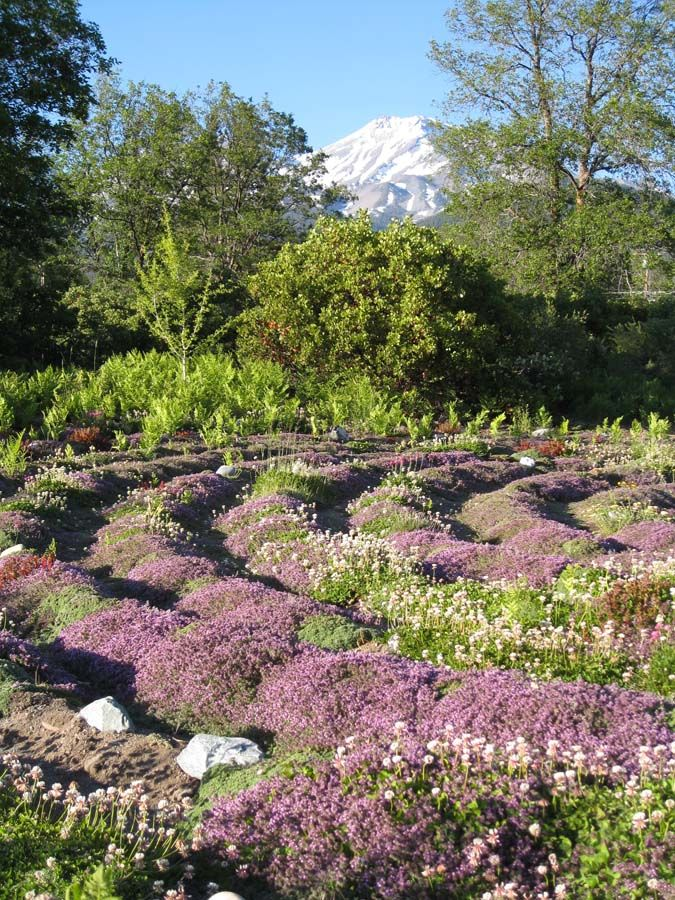 Garden ideas Gateway Peace Garden Mt Shasta