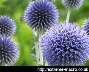 Tall Spiky Plant With Purple Flowers Google Search Plants And