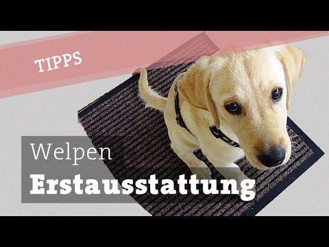 Welpe Erstausstattung Zubehor Anschaffung Welpenausstattung Hund Ausstattung Hundekanal Youtube Hunde Welpen Welpen Welpen Kaufen