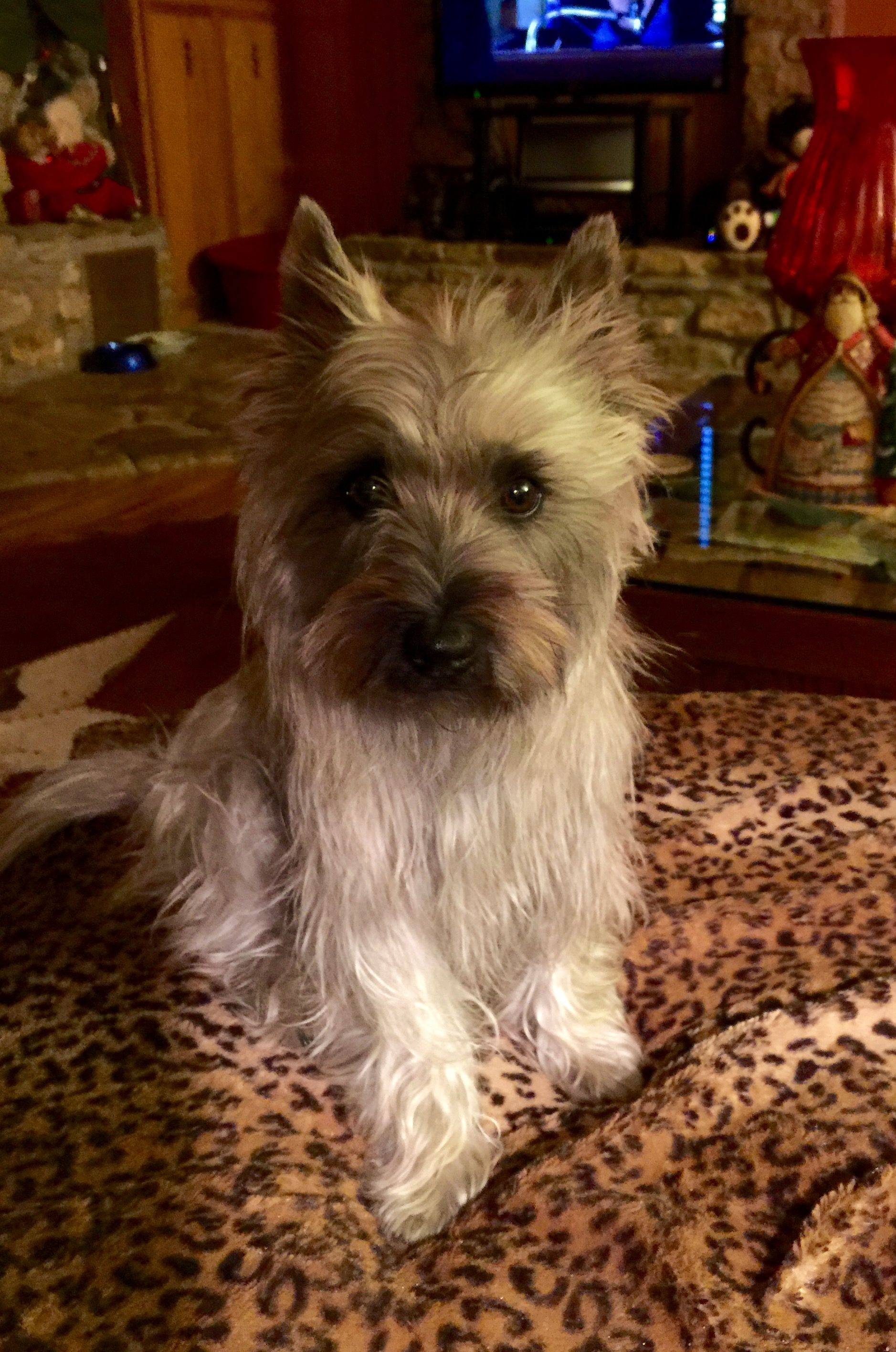 Trudy - fresh from her bath when her babies were 3 days old. Litter born 12/17/14.