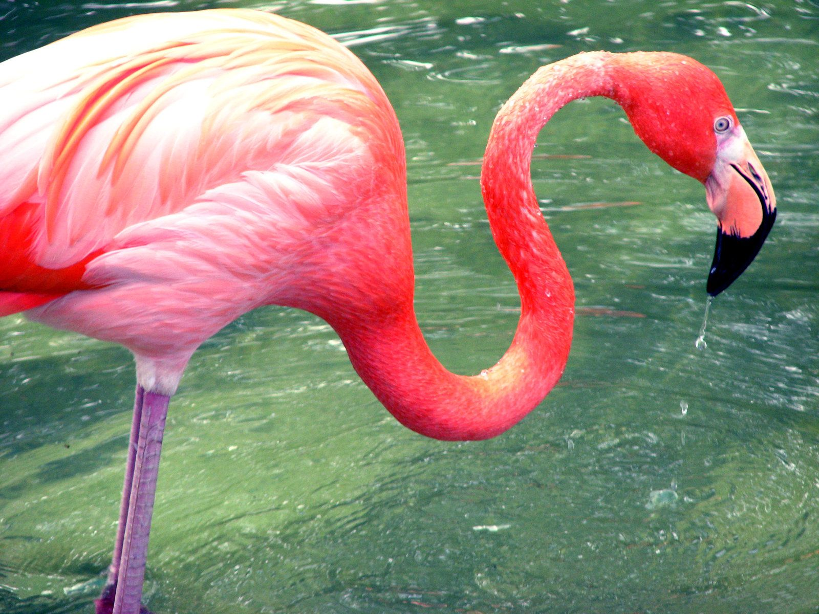 Baby flamingo car interior design - Some Strange Facts Of Animal Are Very Astonishing And Mind Blowing These Animals Facts Help Us To Be Acquainted With Animal S Related