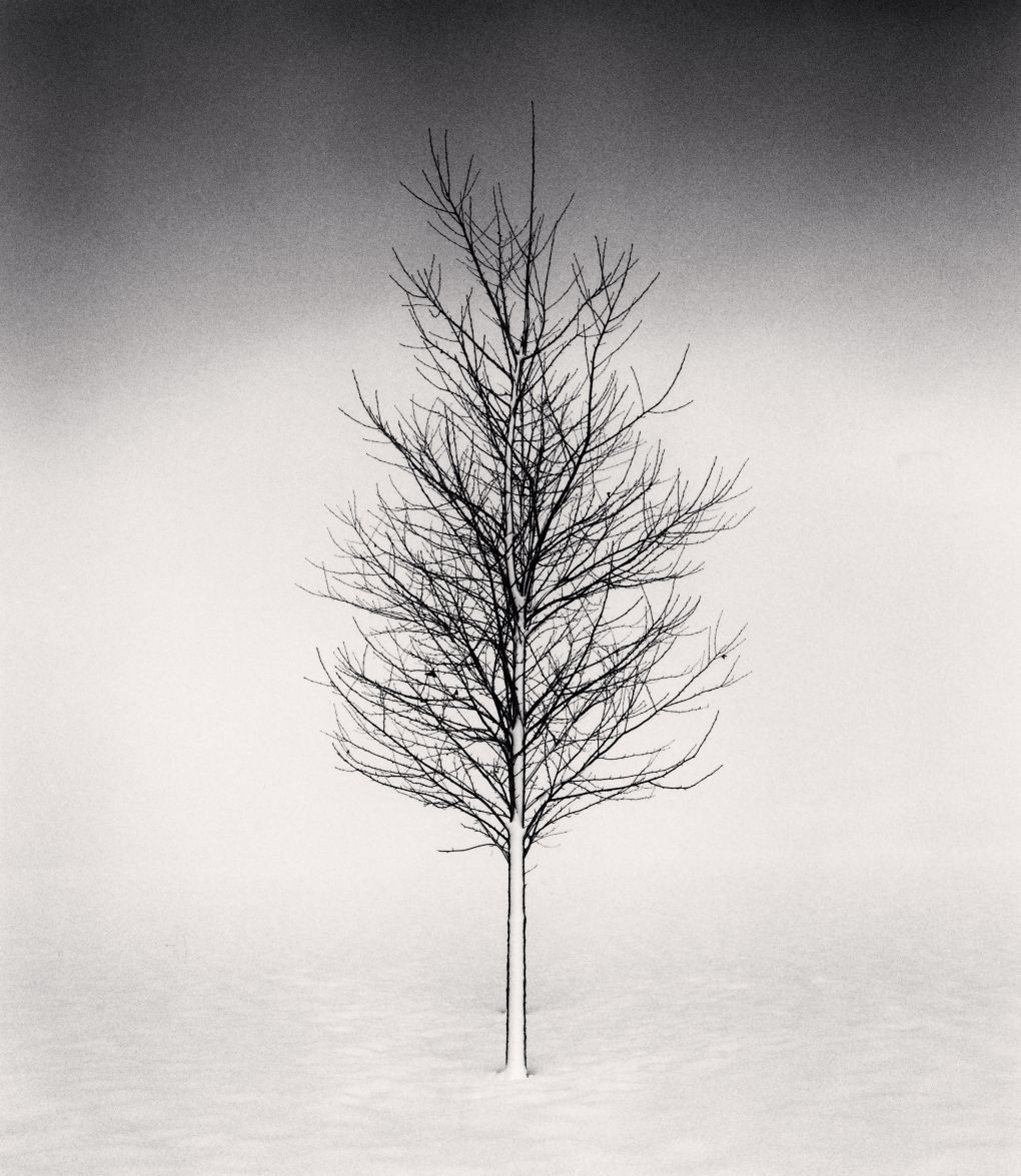 Black and white photography by michael kenna michael kenna tree portrait study i wakoto hokkaido japan 2002
