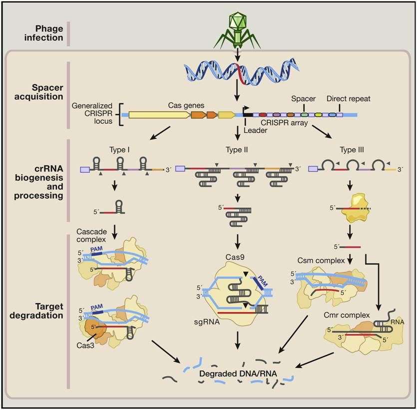 What is CRISPR-Cas9 technology?simple point wise explanation of - new blueprint gene expression