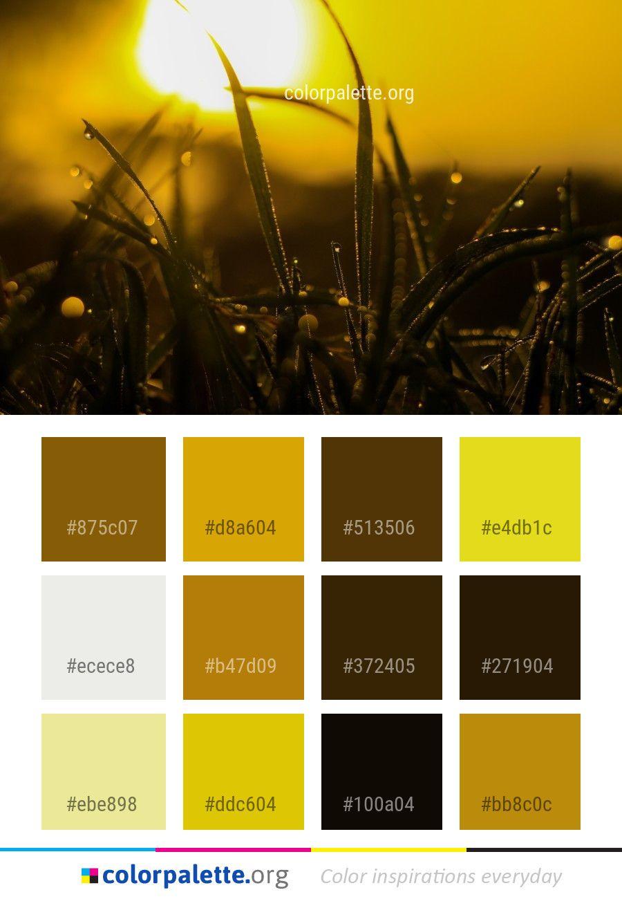 moisture water dew color palette color palettes color schemes rh pinterest com