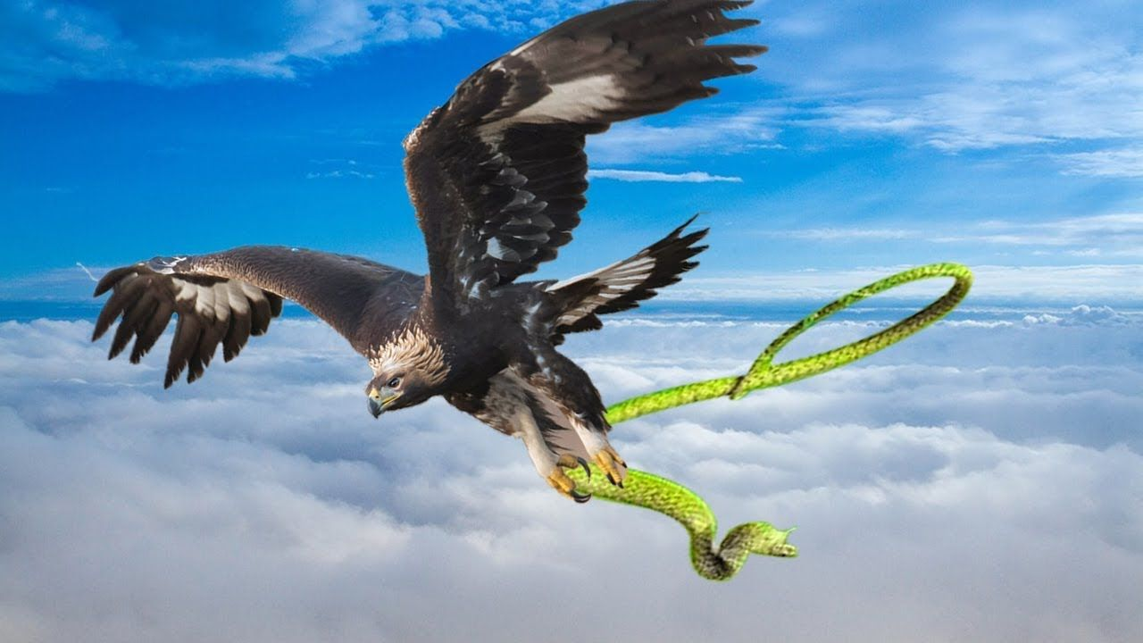 Eagle catching rattlesnake flies into the sky despite