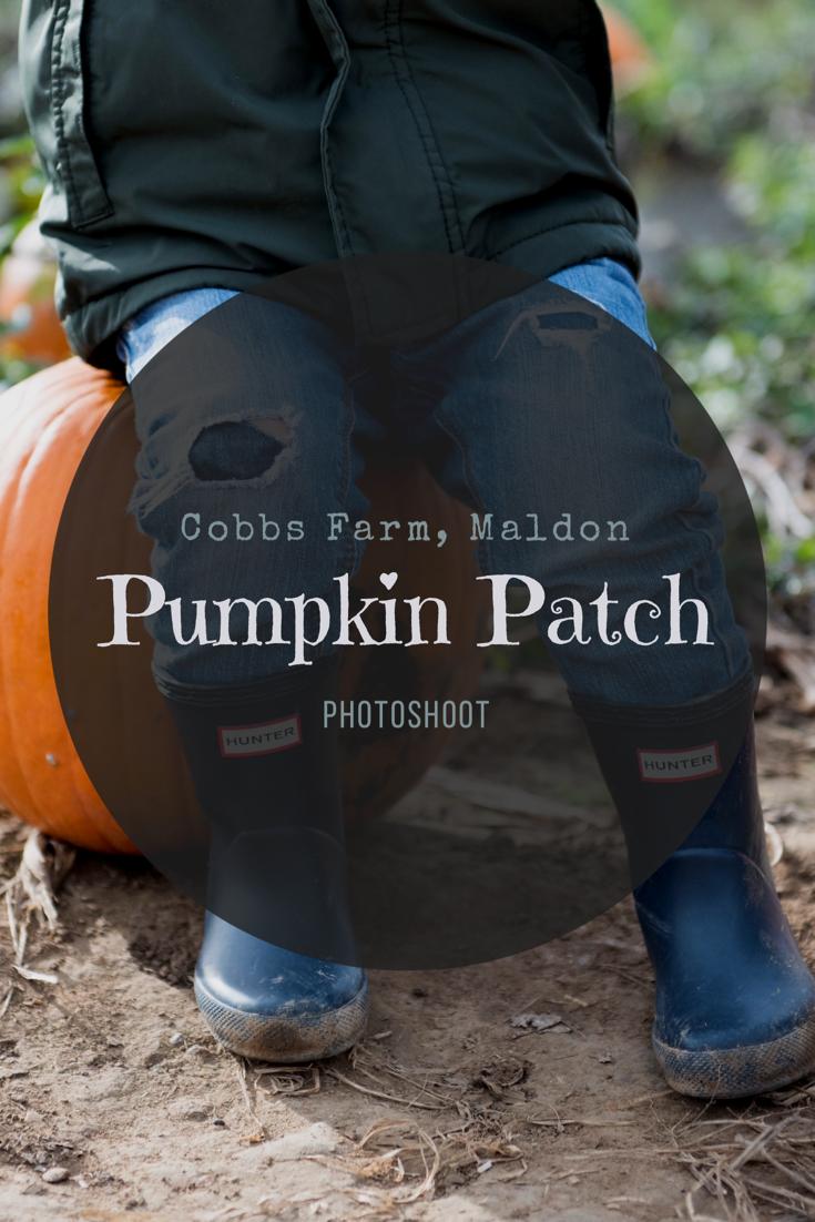 Fun photo shoot at the Pumpkin Patch, Cobbs Farm near