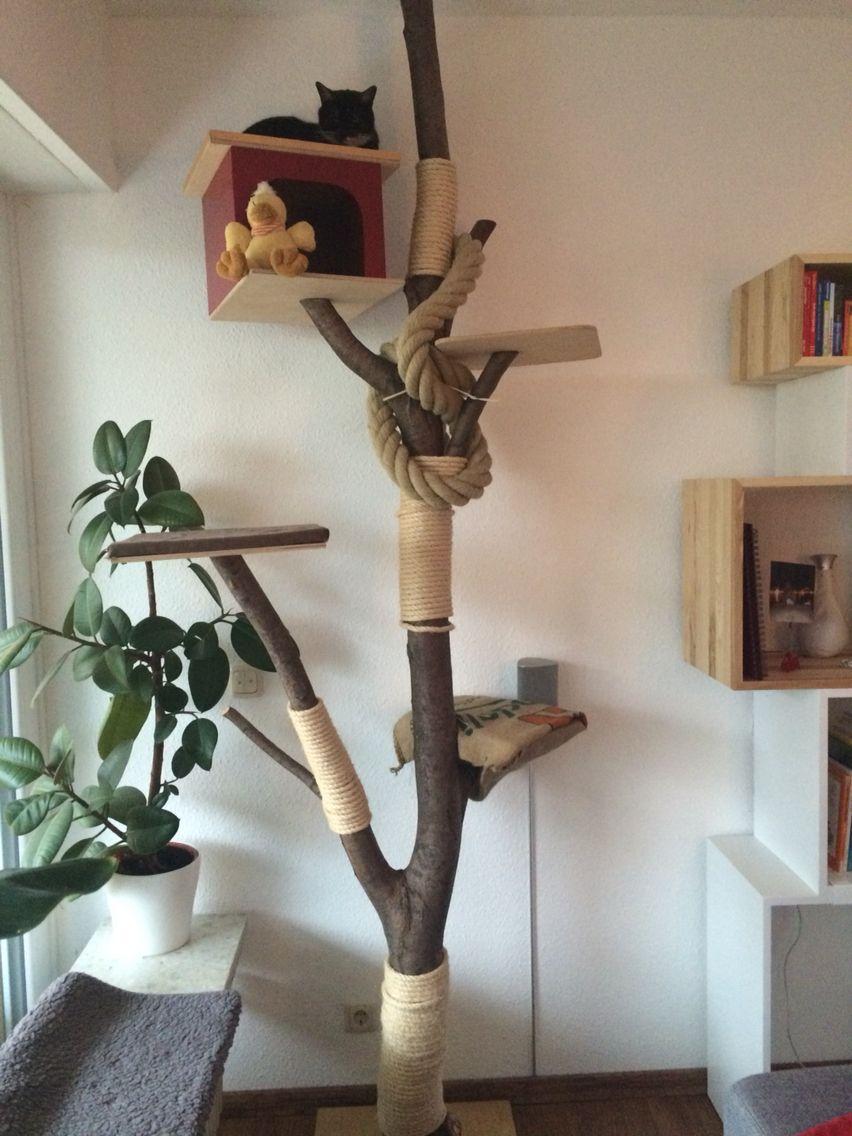 katzenbaum aus baumstamm – wohn-design