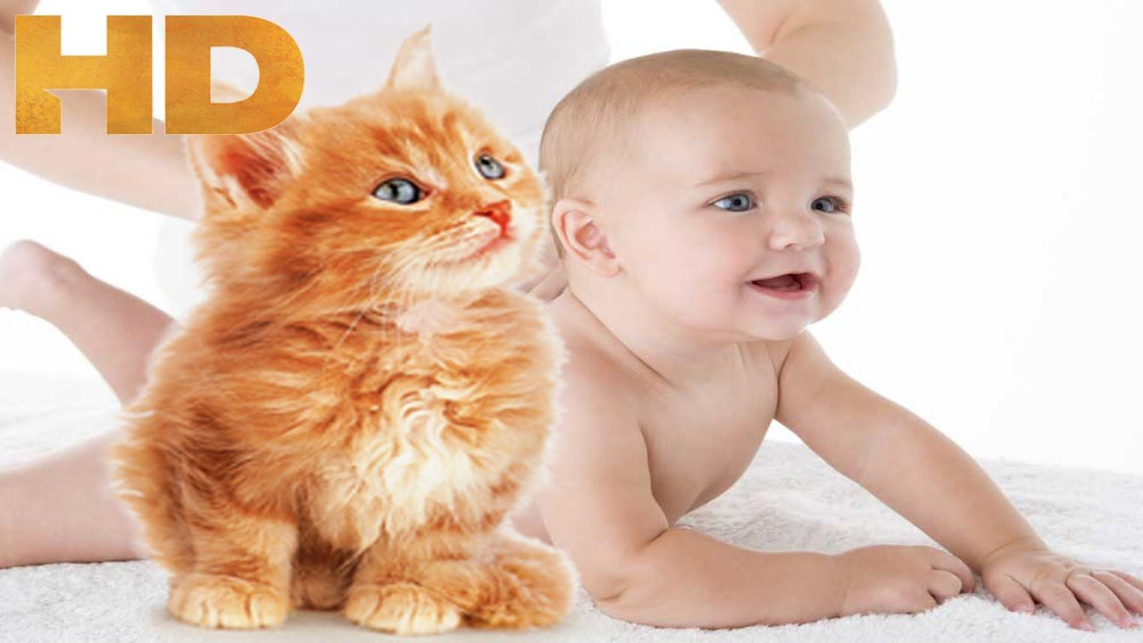 Sweet Kittens & Cute Cats Love Babies Funny Babies Eating