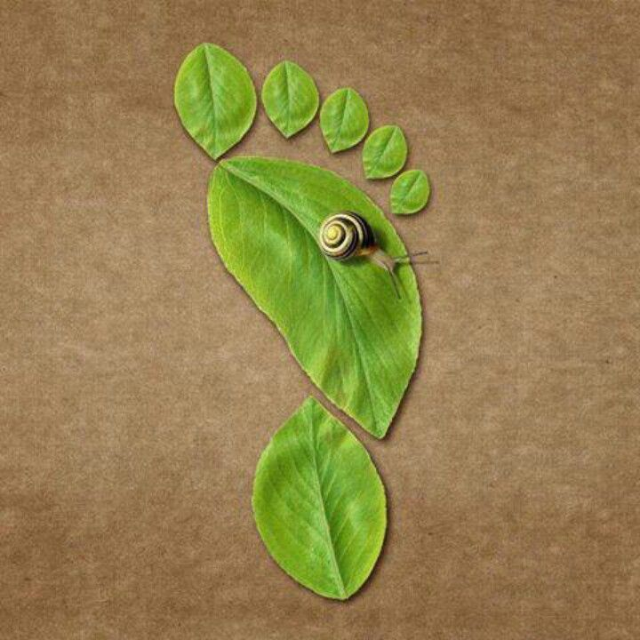 foot leaF- I guess snail means take it slow?