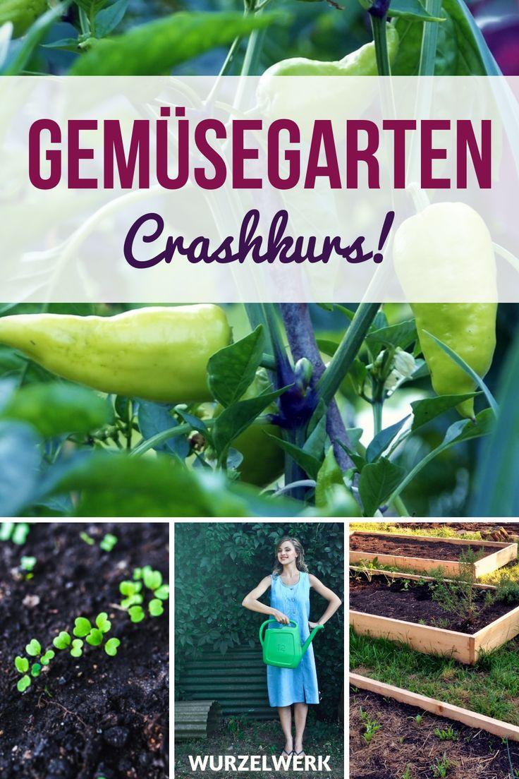 Photo of Gemüsegarten für Anfänger: Crashkurs in 11 Schritten – Wurzelwerk