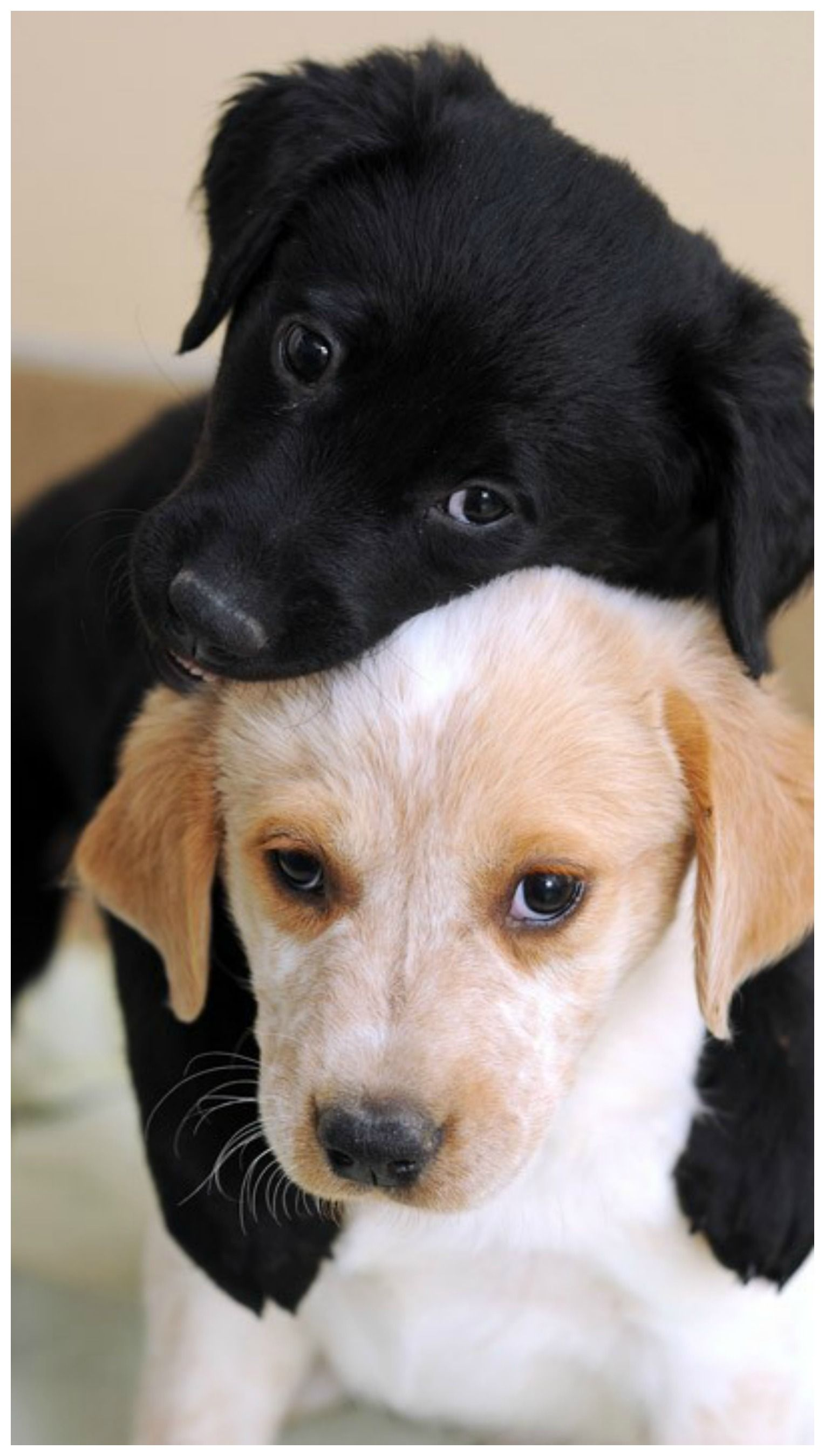 Pin by Tam's Boards ♥ on Dog World Cute puppies, Funny