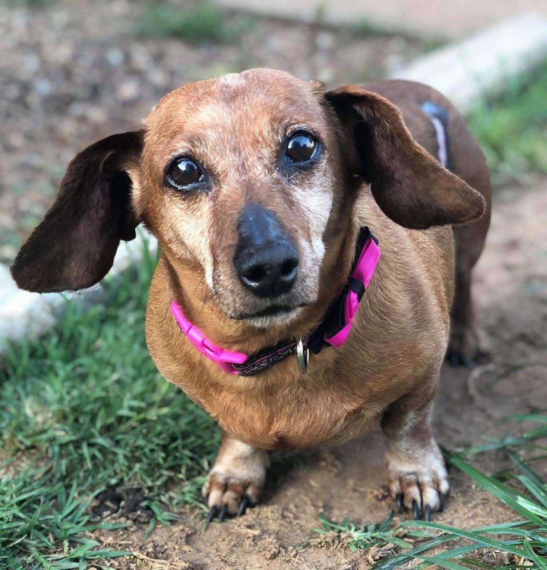Adopt Harley On Adopt Animals Pet Adoption Dogs Adoption