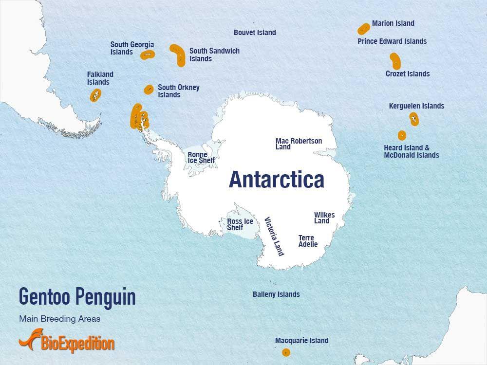 Penguin habitat map - photo#31