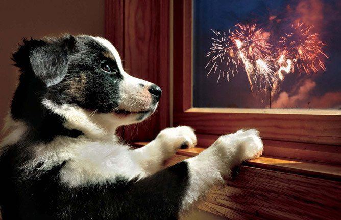 Top Tips To Help Your Pet Have A Stress Free Bonfire Night Your Dog Dogs Your Pet