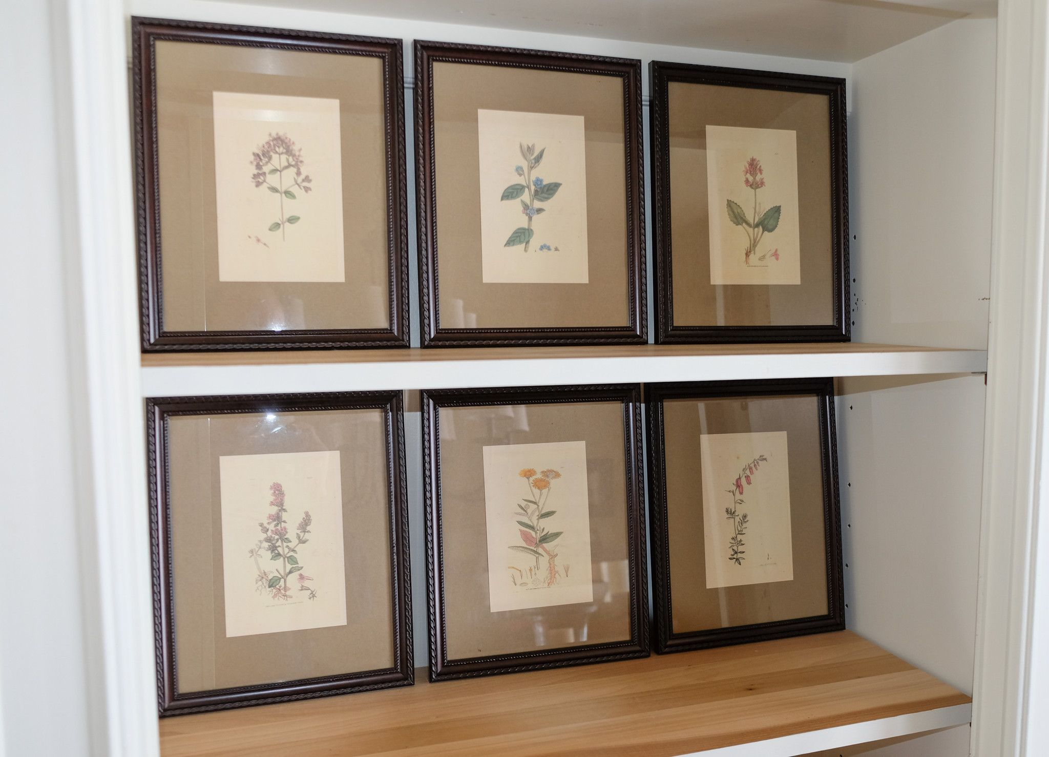 Botanical prints have vintage written all over them display individually or as a set frame size 8 5 x 11 select individually or as a set of 6